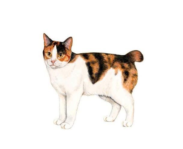 日本猫 - Nihonneko